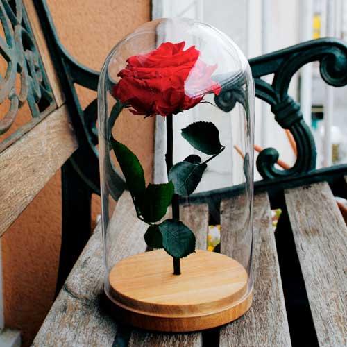 rosa bella y bestia preservada